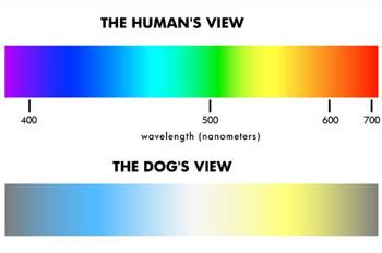 dog_vision
